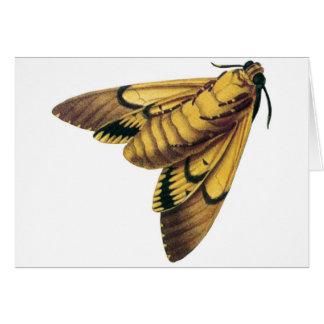 Death's Head Hawk Moth Cards