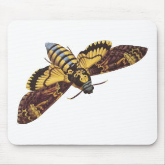 Death's Head Hawk Moth Mouse Pad