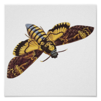 Death's Head Hawk Moth Poster