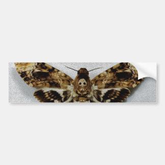 Death's Head Hawkmoth Acherontia Lachesis Bumper Sticker