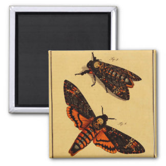 Death's Head Moth Magnets
