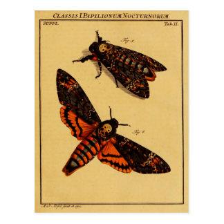 Death's Head Moth Postcards