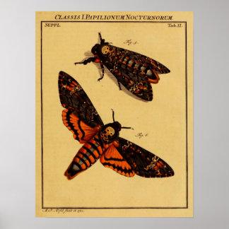 Death's Head Moth Poster
