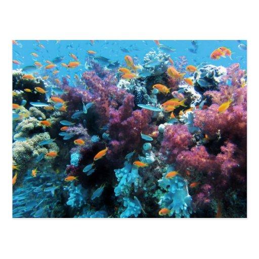 Debajo de coral y de pescados del agua postales