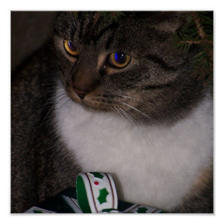 Debajo de la impresión del gato del árbol de navid