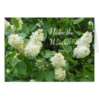 Debajo de las lilas Tiempo-Blancas Tarjeta De Felicitación