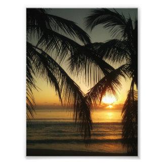 Debajo de los árboles de palma fotografías