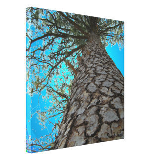 Debajo del árbol lona estirada galerias
