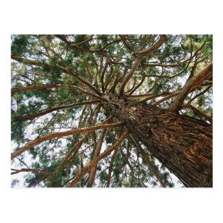 Debajo del árbol postal