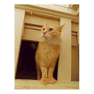 Debajo del gatito de las escaleras tarjeta postal