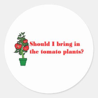 ¿Debo traer en las plantas de tomate? Pegatina Redonda
