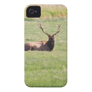 Decano Creek, alce de Oregon Bull iPhone 4 Case-Mate Protector