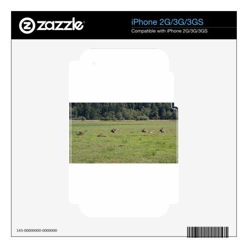 Decano Creek Roosevelt Elk Calcomanía Para El iPhone 2G