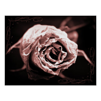 """""""Decaying Beauty"""" Rose Poster"""
