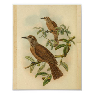 Deceptive Oriole Brown Speckled Vintage Bird Print