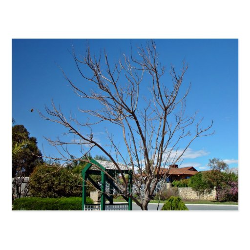 Deciduous tree with single leaf postcard