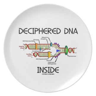 Deciphered DNA Inside (DNA Replication Biology) Dinner Plate