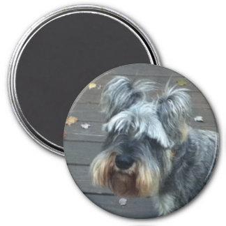 Deck Dog Mini Schnauzer Magnet