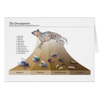 Decomposers Cards