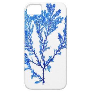 Decoración azul de la playa de no. 3 de la impresi iPhone 5 cárcasas