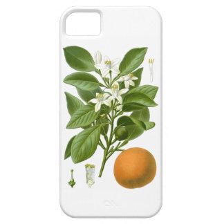 Decoración botánica anaranjada de 2 hogares de los funda para iPhone 5 barely there
