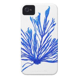 Decoración botánica costera de no. 1 azul de la im Case-Mate iPhone 4 protector