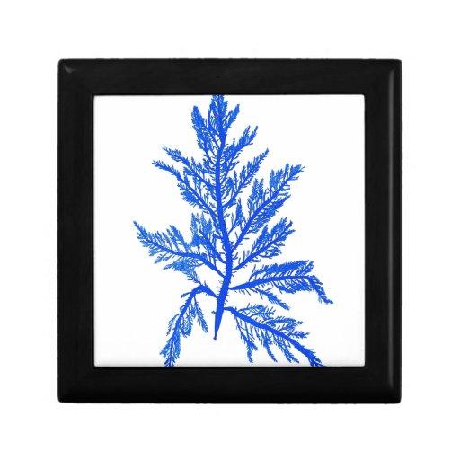 Decoración botánica costera de no. 7 azules de la  cajas de joyas