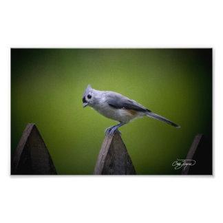 Decoración de la pared de los pájaros de Georgia y Impresiones Fotograficas