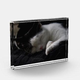Decoración del acrílico de la siesta del gato