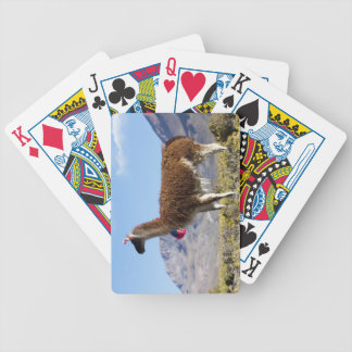 Decorated lama herd in the Puna, Andes mountains 2 Bicycle Playing Cards