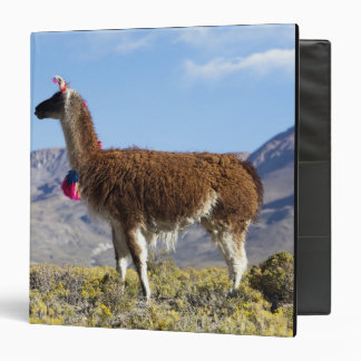 Decorated lama herd in the Puna, Andes mountains 2 Vinyl Binders