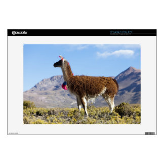 Decorated lama herd in the Puna, Andes mountains 2 Decals For Laptops