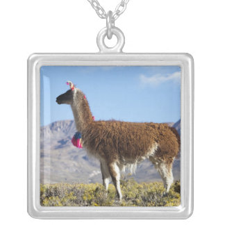 Decorated lama herd in the Puna, Andes mountains 2 Silver Plated Necklace