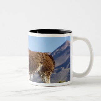 Decorated lama herd in the Puna, Andes mountains 2 Two-Tone Coffee Mug