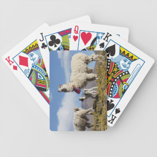 Decorated lama herd in the Puna, Andes mountains 3 Bicycle Playing Cards