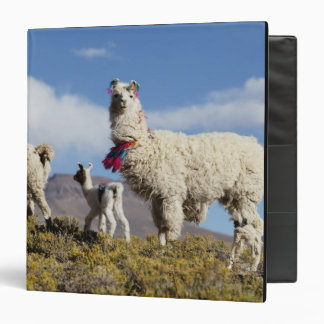 Decorated lama herd in the Puna, Andes mountains 3 Binders