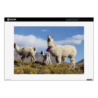 Decorated lama herd in the Puna, Andes mountains 3 Laptop Skin