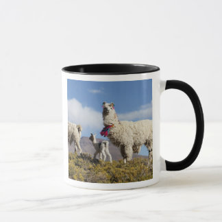 Decorated lama herd in the Puna, Andes mountains 3 Mug