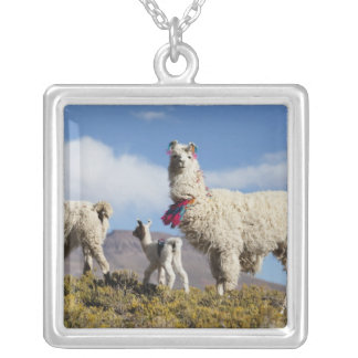 Decorated lama herd in the Puna, Andes mountains 3 Silver Plated Necklace