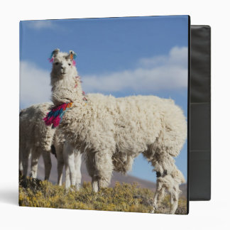 Decorated lama herd in the Puna, Andes mountains 3 Ring Binder
