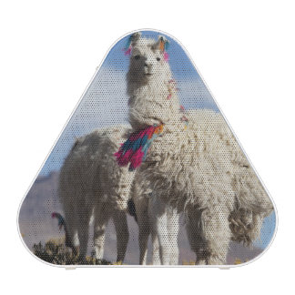 Decorated lama herd in the Puna, Andes mountains Bluetooth Speaker