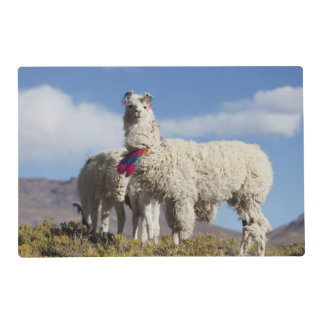 Decorated lama herd in the Puna, Andes mountains Laminated Placemat