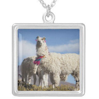 Decorated lama herd in the Puna, Andes mountains Silver Plated Necklace