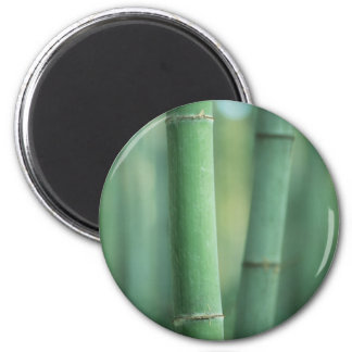 Decorative Bamboo Stalks Magnet