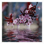 Decorative cherry tree blossoms poster