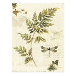 Decorative Ferns and a Dragonfly Postcard