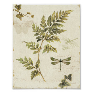 Decorative Ferns and a Dragonfly Poster