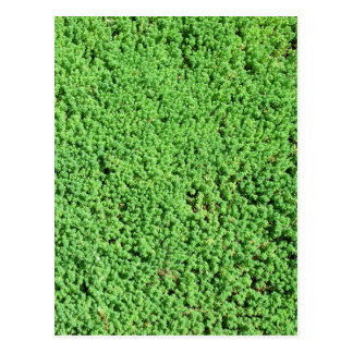Decorative green grass postcard