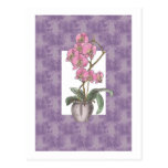 Decorative Orchid Design Post Card