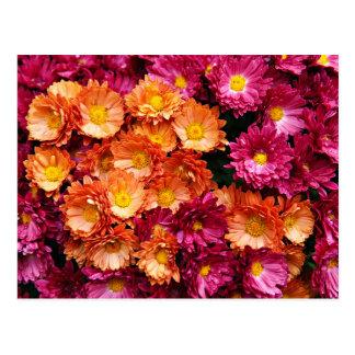 Decorative pink and orange flowers postcard